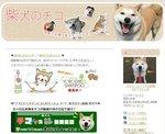 柴犬のチコ 笑顔が自慢の柴犬チコです ヨロチコね.jpg