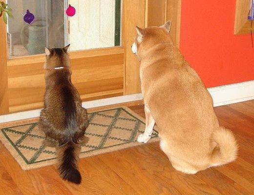 ネコ・イヌ 後姿